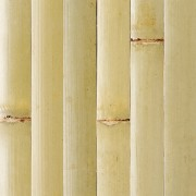 Raw Green Plyboo Tambour Bamboo Paneling